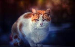 Picture cat, look, muzzle, Kote, cat