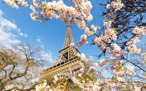 Picture Paris, tower, spring, flowering trees
