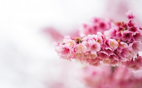 Picture flowers, spring, Branch, flowering