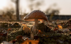 Picture autumn, nature, mushroom