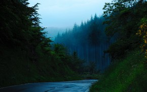 Picture forest, road, nature, mountains, mist, Trees