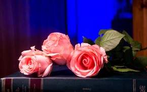 Picture flowers, blue, background, roses, bouquet, book, pink, buds, salmon
