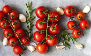 Picture greens, drops, background, food, harvest, fabric, vegetables, tomatoes, a lot, on the branch, tomatoes, composition, …