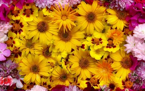 Picture flowers, yellow, pink, a lot