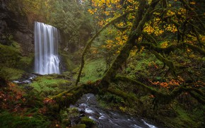 Picture autumn, forest, trees, nature, waterfall, moss