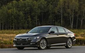 Picture forest, Honda, Accord, sedan, Hybrid, hybrid, 2018, Touring, four-door