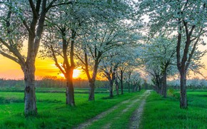 Picture road, sunset, spring, Germany, flowering, near Berlin