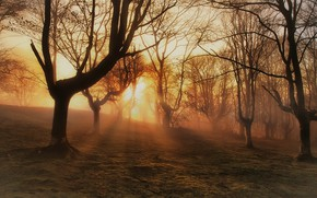 Picture forest, fog, morning