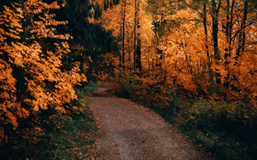 Picture road, autumn, forest, trees, landscape, nature