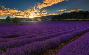 Picture Landscape, Sunset, France, Provence-Alpes-Cote d'azur, Lavender Field