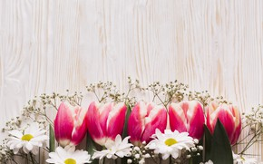 Picture flowers, tulips, chrysanthemum