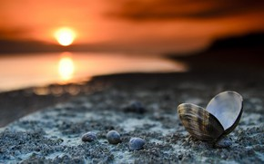 Picture sea, beach, sunset, shore, the evening, shell