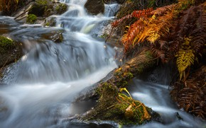 Picture forest, stream, river, Finland, Northern Savonia