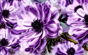 Picture Graphics, Flower, Anemone