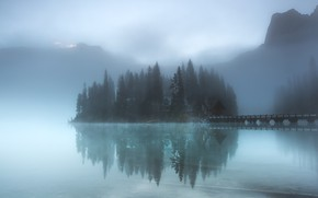 Picture forest, lake, island, fog