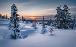 Picture winter, snow, trees, sunset, the snow, Russia, Murmansk oblast, Волосяная сопка, Кандалакшский залив, Андрей Баскевич
