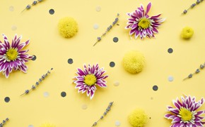 Picture flowers, background, chrysanthemum