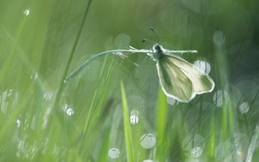 Picture grass, macro, light, green, glare, background, butterfly, stem, insect, white, bokeh