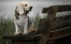 Picture animal, dog, profile, bench, dog