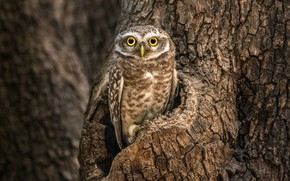 Picture nature, tree, owl, bird, bokeh