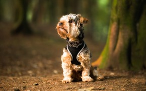 Picture nature, background, dog