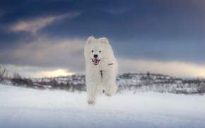 Picture winter, language, white, the sky, snow, clouds, nature, pose, jump, hills, dog, running, puppy, walk, …