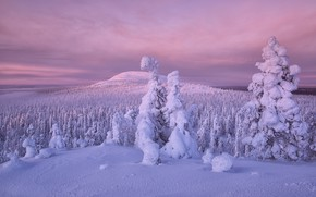 Picture winter, forest, snow, trees, Finland, Lapland