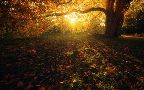 Picture autumn, grass, leaves, the sun, rays, light, landscape, branches, bright, nature, Park, tree, lawn, glade, …