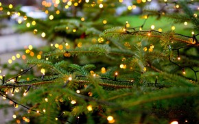 Picture tree, garland, fir-tree branches