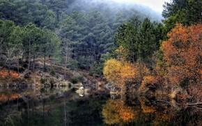 Picture autumn, forest, landscape, nature, lake
