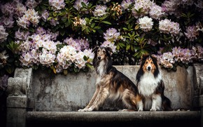 Picture dogs, flowers, friends