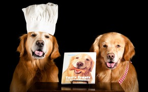 Picture language, dogs, face, table, two, dog, pair, cook, book, image, black background, two, a couple, …