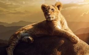 Picture stone, stone, lion, Jackson Carvalho, lionet