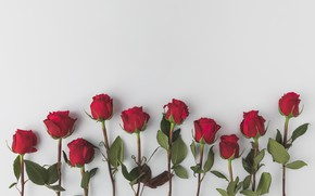 Picture background, Roses, buds, FLOWERS