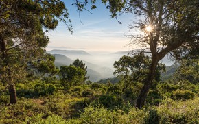 Wallpaper forest, fog, morning