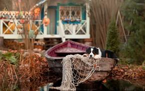 Picture animal, network, boat, dog, dog, Aussie, Ирина Ковалёва