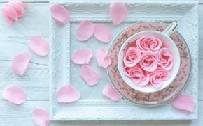 Picture rose, frame, petals