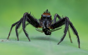 Picture macro, background, spider, insect
