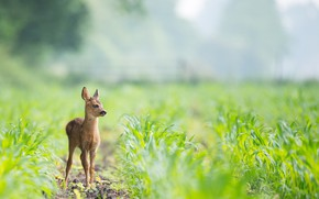 Picture nature, deer, baby
