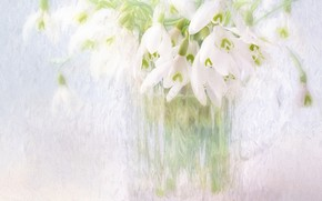 Picture flowers, bouquet, snowdrops, light background