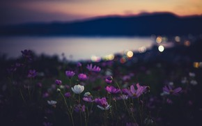 Picture flowers, night, nature