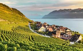 Picture lake, home, Switzerland, Alps, the vineyards, Lavaux, Laveau
