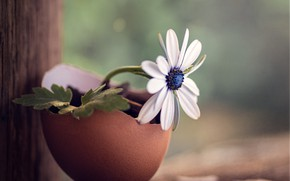 Picture flower, macro, shell, wood