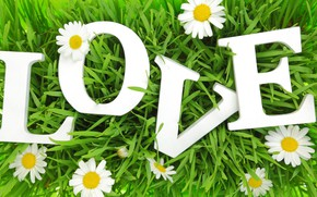 Picture grass, love, letters, chamomile, love, grass, letters, chamomile, love