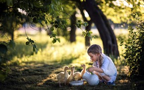 Picture nature, girl, the goslings