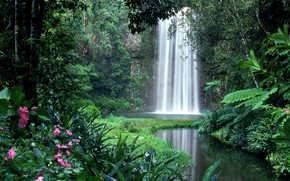 Picture greens, tropics, thickets, waterfall, jungle, the bushes, Amazon