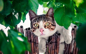Picture cat, cat, look, leaves, the fence, muzzle, cat