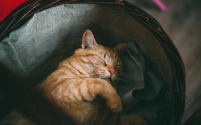 Picture cat, cat, face, pose, comfort, the dark background, background, basket, sleep, paws, red, sleeping, house, …