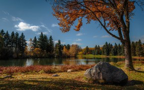 Picture autumn, lake, Park, geese