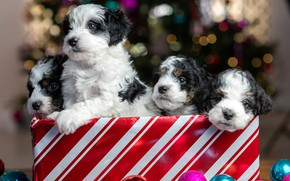 Picture balls, glare, package, puppies, Christmas, New year, kids, Quartet, faces, doggie, Бернедудель